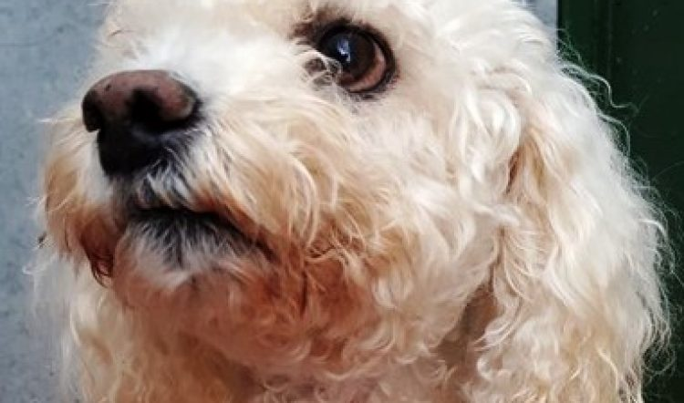 TILLY – HOME CHECKING