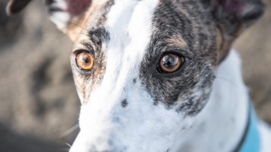 LACEY – RESERVED