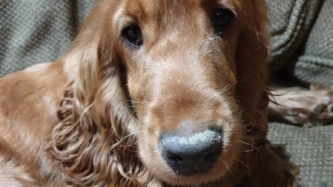 TOFFEE – NOT YET AVAILABLE FOR ADOPTION